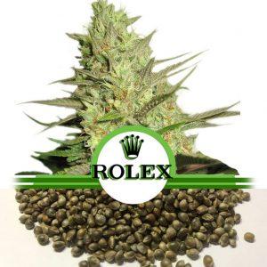 Rolex Haze