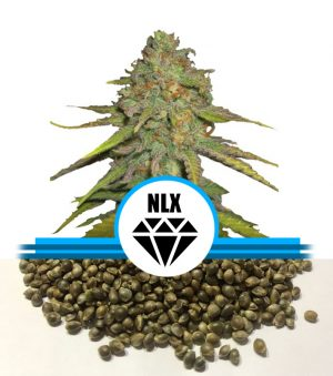 NLX Diamond Autoflower